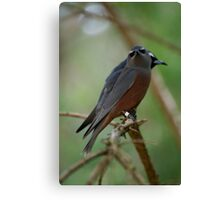Pair Of White Browed Swallows Canvas Print