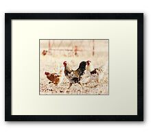 Chicken Run Framed Print