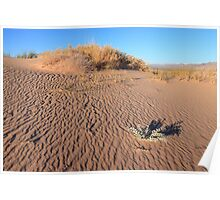 Kelso sand dunes Poster