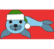 Light Blue Baby Seal with Christmas Green Santa Hat Photographic Print