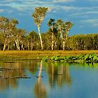 Billabong by Barrie Collins