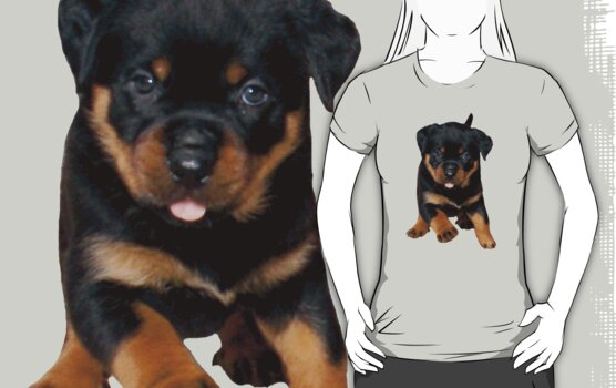 Run Rottie, Run Rottie, Run Run Run....... by taiche