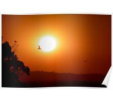 Sunset Soaring Poster