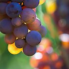 grape by Carine LUTT