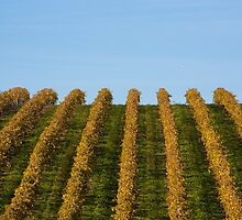 French vineyard during autumn by Carine LUTT
