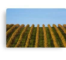 French vineyard during autumn Canvas Print