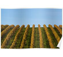 French vineyard during autumn Poster