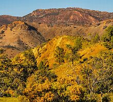 Early Morning by Bette Devine