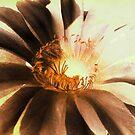 Textured Kaktus Flower. by Vitta
