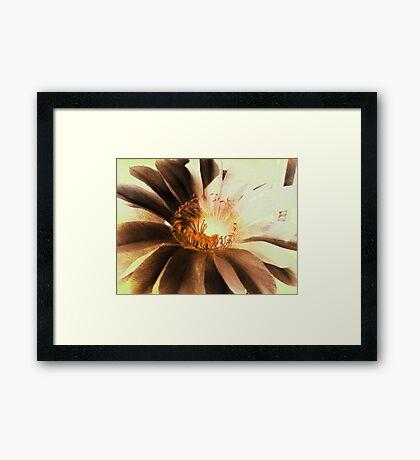Textured Kaktus Flower. Framed Print