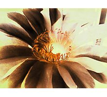Textured Kaktus Flower. Photographic Print