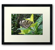 Black & White Butterfly Framed Print