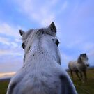 Dartmoor: 'Extreme Close Up' by Rob Parsons