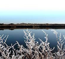 frosty branches in snow against cold blue sky and river by morrbyte