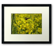 Yellow flower and bee Framed Print