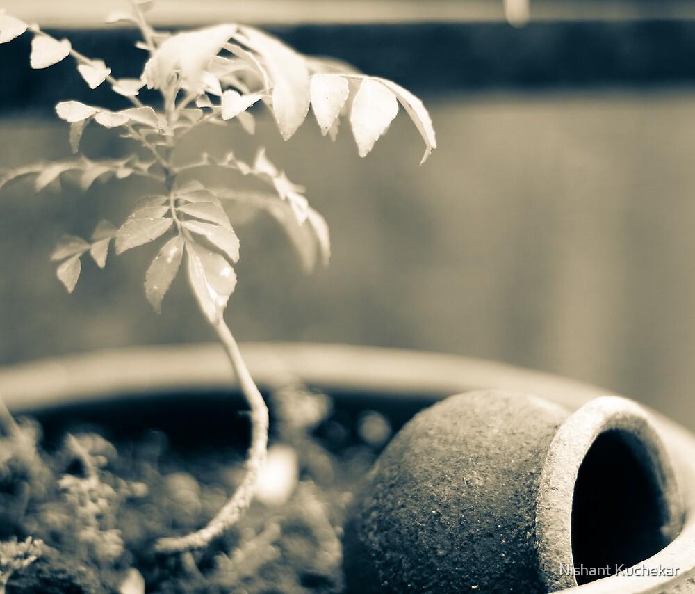 Still Life by Nishant Kuchekar