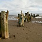 Groynes on a Yorkshire Beach by Steven  Lee