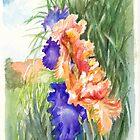 Irises in Hobart Botanic Gardens by Dai Wynn