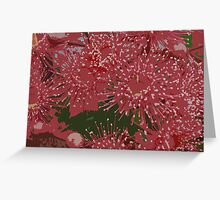 Gum blossoms Greeting Card