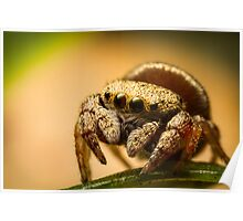 (Simaethula ZZ483) Jumping Spider Poster