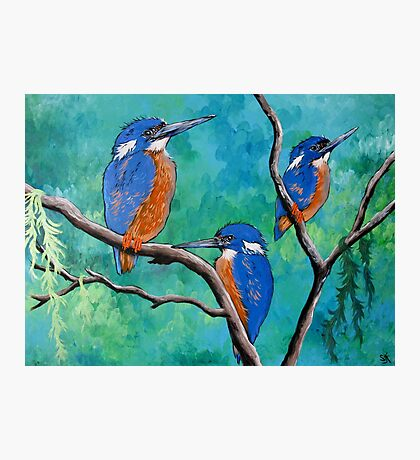Above The Water Line ( Azure Kingfishers ) Photographic Print