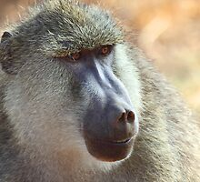Yellow Baboon Portrait by Carole-Anne