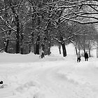 a very white winter walk by irishgirl7