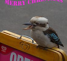 Kookaburra Merry Christmas 2 by Pauline Tims