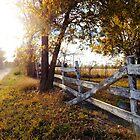 Fallen Fence in Autumn Beauty by MissCandacePope
