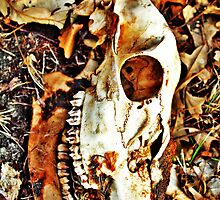 Deer Skull by EBArt