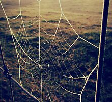 frosted web by Stephanie Aughenbaugh