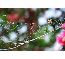 Spider Hard at Work Photographic Print