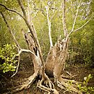 Swamp Tree Split in Half by -aimslo-