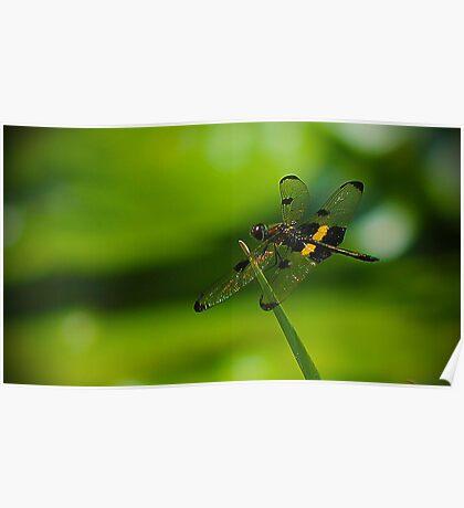 Dragonfly Macro Poster