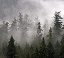 Clouds swirl around the treetops in Belcarra Regional Park by Michael Russell