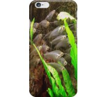 Cat Fish iPhone Case/Skin