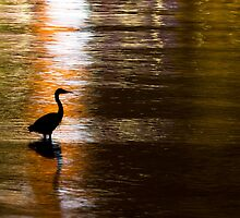 Great Blue Heron in Stanley Park by Michael Russell