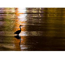 Great Blue Heron in Stanley Park Photographic Print