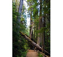 Fallen Tree in near Mount Rainier Photographic Print