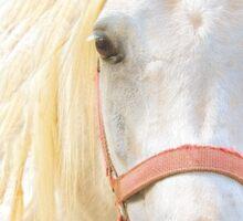 Portrait of a white horse Sticker