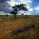 Tree Envy by Ladyshark