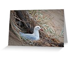 Silver gull nesting Greeting Card