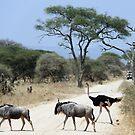 Wildlife crossing by Hannah Nicholas