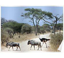 Wildlife crossing Poster