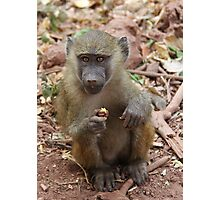 Young Yellow Baboon (Papio cynocephalus) Photographic Print