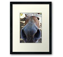 Matilda the Mule Wants Cookies! Framed Print