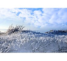 frosty snow covered grass ditch Photographic Print