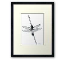 Broad Backed Chaser  Framed Print