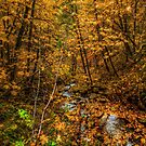 I Have Some Gold by Charles & Patricia   Harkins ~ Picture Oregon