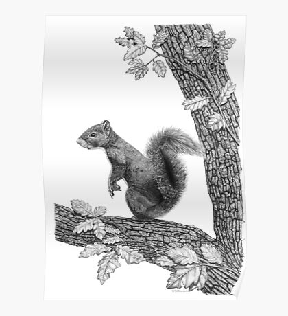 Mr Squirrel Poster